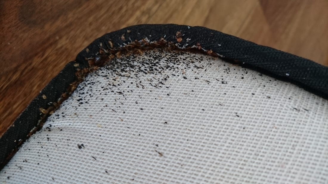 closer image of Bed Bugs activities around mattress surry hills