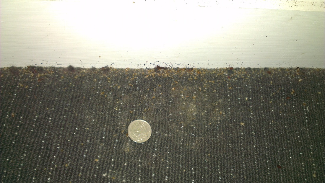 closer image of Bed Bugs activities around skirting Darlinghurst
