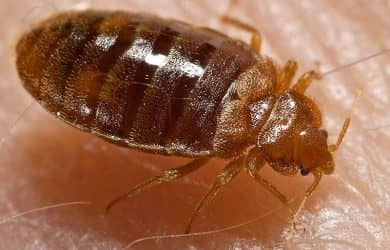 NEAR ME BED BUGS