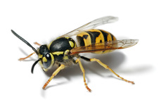 Wasp Nest Removal Pest Control Prices